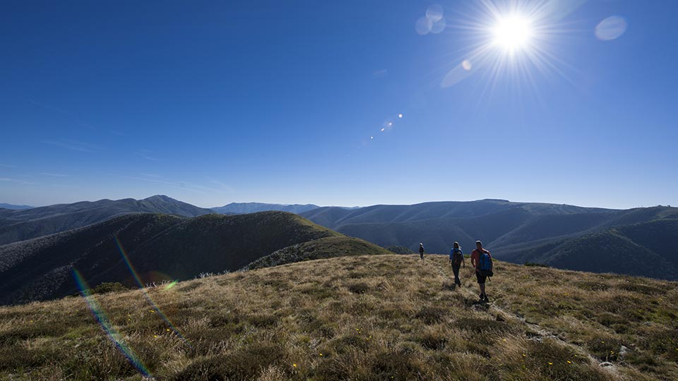 Hiking on Mt Hotham in the summer
